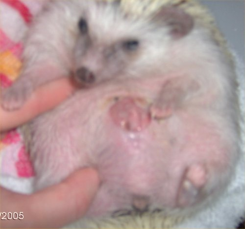 Mouth tumor hedgehog 10 Common